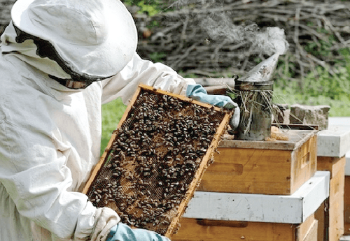 Beekeeping is a lifetime business in Ghana