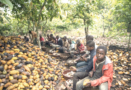 COCOBOD believes there is no child labour in the cocoa sector